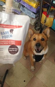 Corgi Mix waiting for Cheesylicious Salmon Recipe Bark Pouch