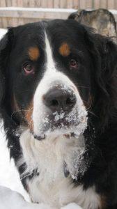 Good dog behavior in cold weather