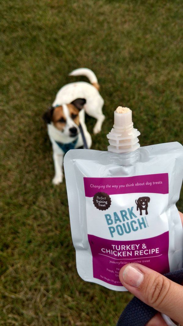 Rescue dog waiting patiently for Turkey and Chicken Bark Pouch dog treats