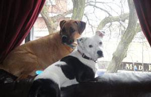 Stewie and Bessie home alone